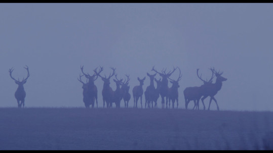 DeerBoy_Stills_02